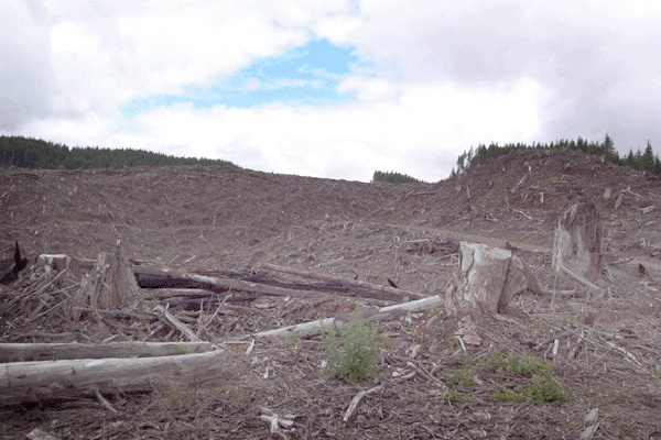 Clear cut mountain
